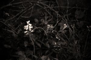 Natural Beauty_Bells