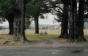 Kiriwhakapapa, New Zealand.