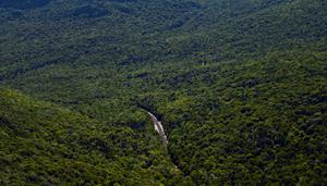 Road Through Wilderness