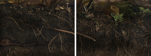 Underneath the Hydrangea (Diptych)