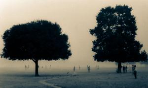 On a misty morning at the park (Kolkata Maidan).