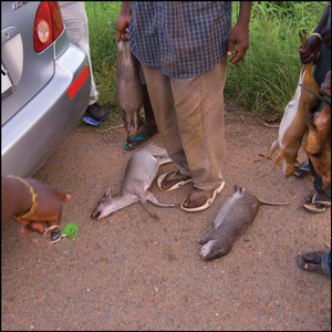 Bush catch, road to Kakum