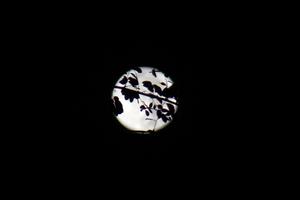 night journey III - thai moon