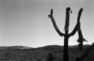 Inhabited Deserts - USA