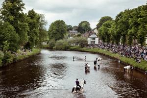Horses in the river Eden