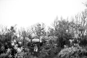 Porter ascending  with trekkers equipment