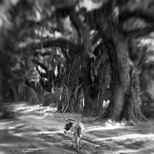 Donkey on Oak Road © Anne Berry
