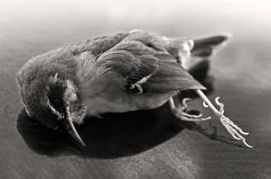 The Lost Bird_II