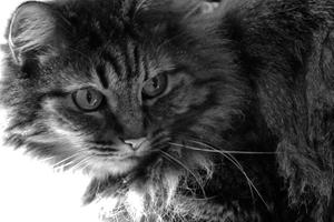 Mary's Cat, Luray, Virginia