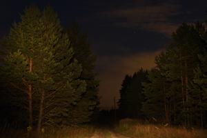 Теплый свет ночи