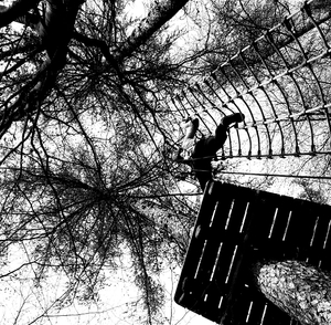 Tightrope in the trees