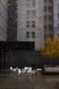 Rainy day / Regenachtige dag