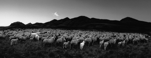 """From the photobook """"Here far away"""" © Pentti Sammallahti"""