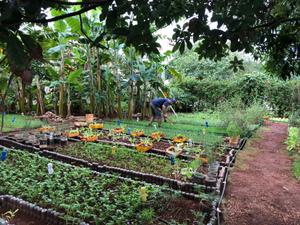 Organic Garden, Havana