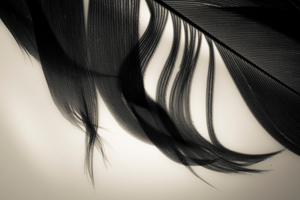 9. Feather Series