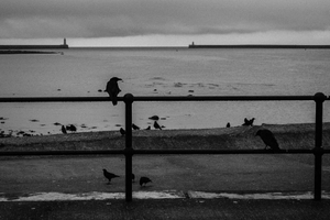 The birds wait.