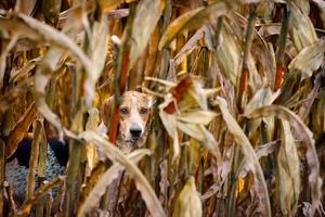 Child of the Corn