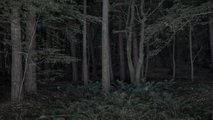 Foresta - reverse 03-2