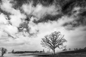 Farmer's Tree, Bacon Hill, NY, 2018