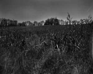 Moon Corn © Allison Barnes
