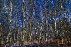 Birch Blues