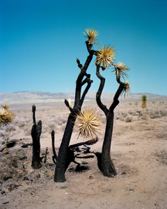 """Gregory Halpern. Image from """"ZZYZX"""" (MACK, 2017). Courtesy of the author and MACK"""