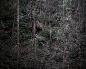 Untitled - Woodlands