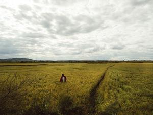Xiaohua among the rice paddies.