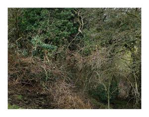 Totley Brook #4