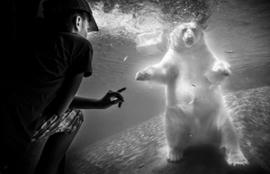 Whispers - Polar Bear