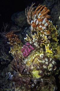Reef at night