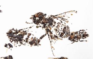 © Matthew Brandt, Bees of Bees 2 (Detail), 2012