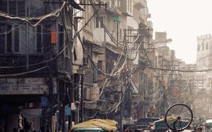 Cables jungle