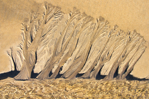 Golden Treescape