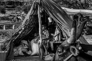 A child looks on as he sits in a makeshift tent built inside one of the numerous cattle camps, Maharashtra 2016.