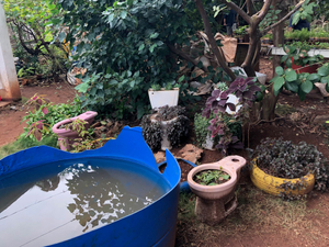 Recycled Toilets and Partial Water Tower, Organic Garden, Havana