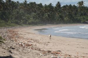 Diogo island.