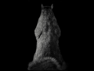 Animal (122) 2008.