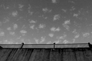 brushy sky