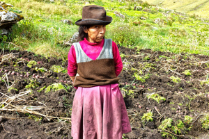 Peru potato farmer