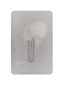 fiore morti