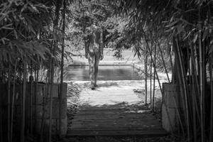 Pool Bamboo Nude