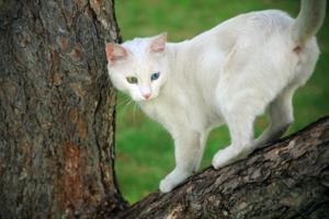 Angora street cat, Ankara