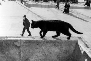 stray cat-4