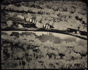 Valley of Shadows (Cochise)