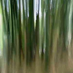 Black Bamboo 2 (vibrations) © Alfred Tom