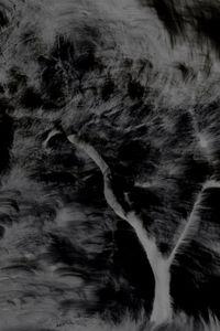 Untitled (Trees 1)