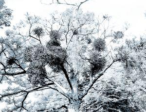 Trees 18