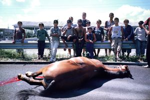 Gypsies mourning for their horse, hit by a truck
