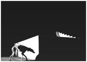 A grey hound